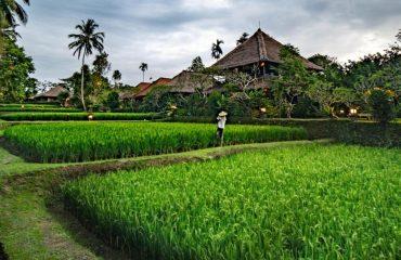 Ananda Cottages (4)