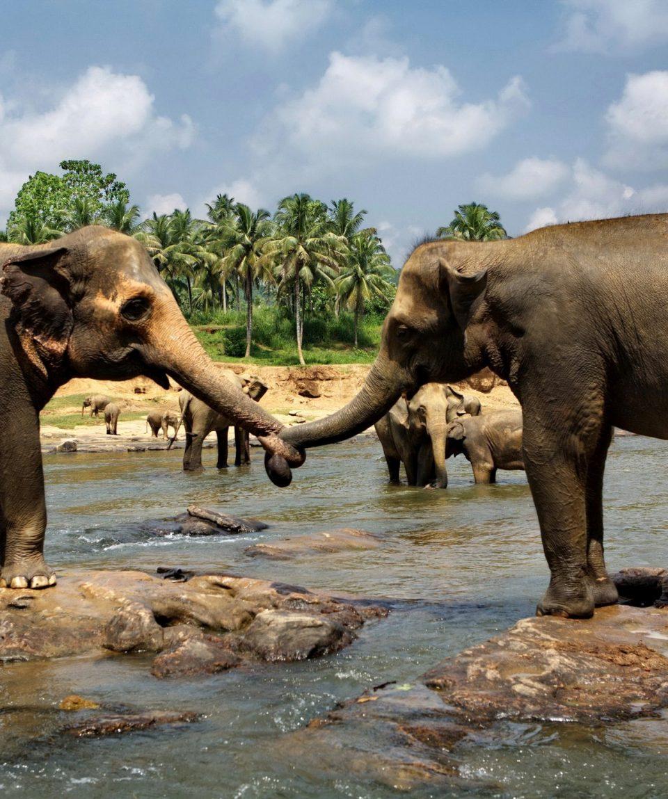 Elephant orphanage in Pinnawala, Sri Lanka