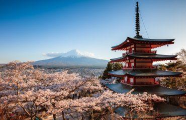 Ciresi infloriti - Fuji, Japonia