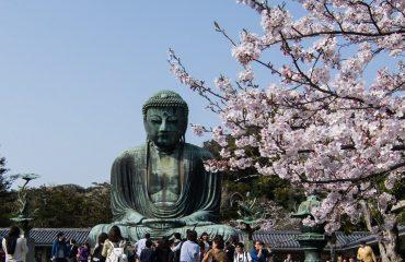 Ciresi infloriti - Kamakura, Japonia