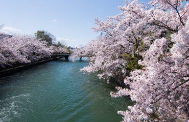 Japonia exact-14