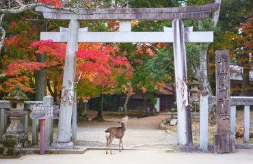 Nara, Japonia