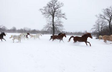 Program echitatie iarna