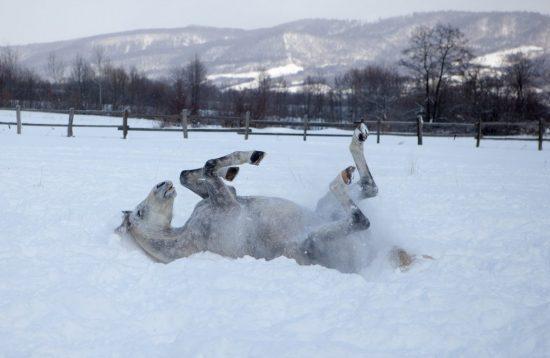 Echitatie iarna in Transilvania
