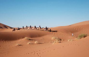 Beduini - Egipt