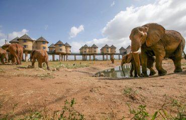 Salt Lick Safari Lodge - Kenya 4