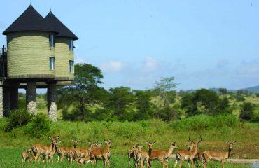 Salt Lick Safari Lodge - Kenya 5