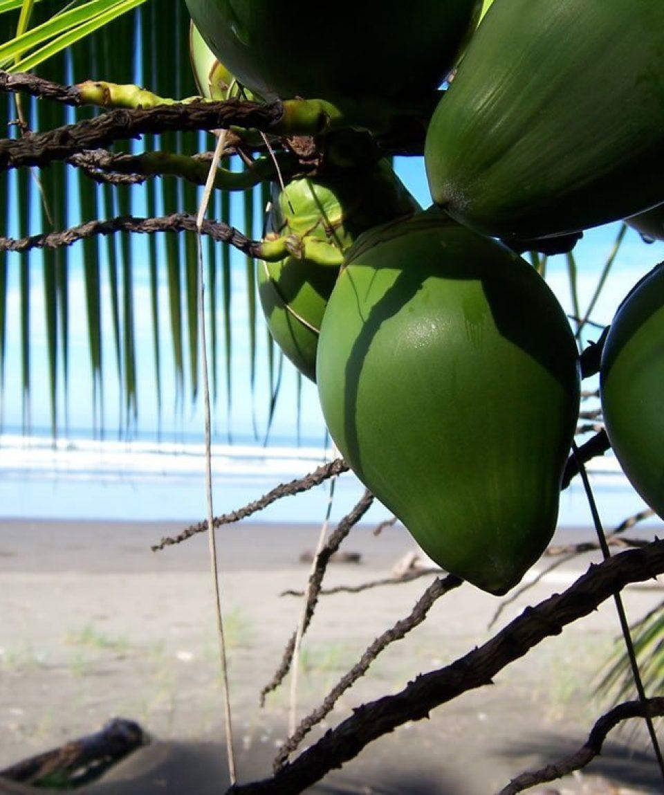 cocos-pipas-1327096